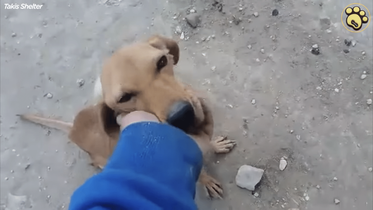 Greek Rescuer Saves An Emaciated Dog From A Life Of